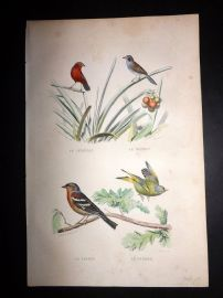 Buffon 1849 Hand Col Bird Print. Chaffinch, Senegal Finch, Bengali, Greenfinch